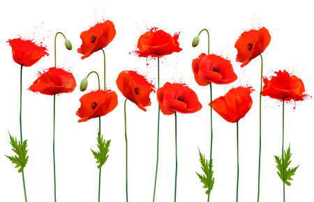 Beautiful nature poppy background. Vector.