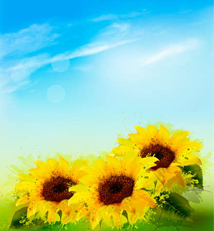 Nature background with sunflowers and blue sky. Vector