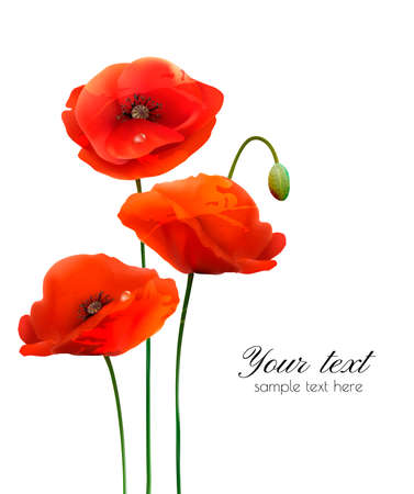Red Poppy flowers isolated on white background. Vector illustration  イラスト・ベクター素材