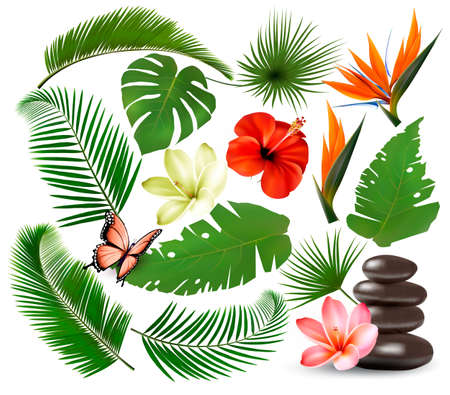 Big collection of tropical leaves and plant, flowers and butterfly. Vector 일러스트