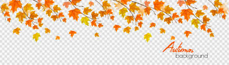 Nature autumn panorama with colorful leaves and raindrops on transparent background. Vector