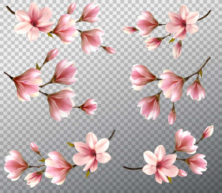 Big collection with beautiful magnolia branches on transparent background. Vector. Ilustrace