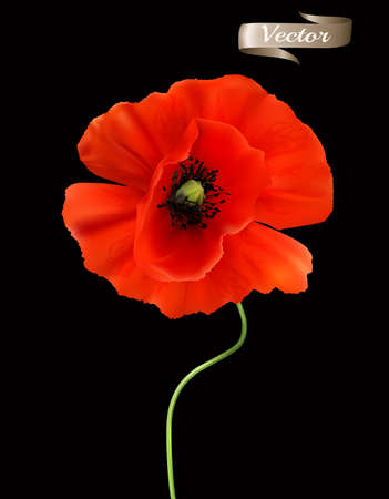 Red Poppy isolated on black background. 3d Realistic Vector Ilustracja