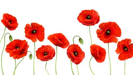 Red Poppy background. 3d Realistic illustration Vecteurs