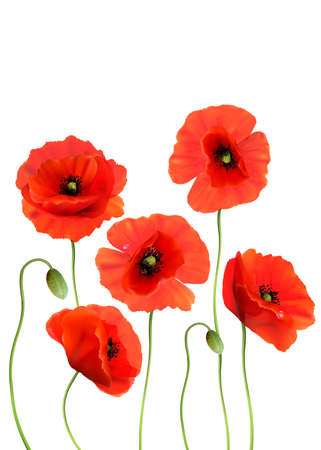 A Red Poppies isolated on white background. 3d Realistic Vector Ilustración de vector