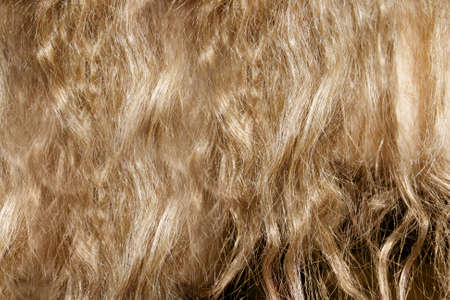 uncombed: Blonde hair abstract background.