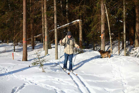 Young man cross-country skiing on a sunny winter day through the damaged forest