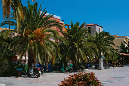 Beautiful street with massive palms in city of Chania on island of Crete, Greece