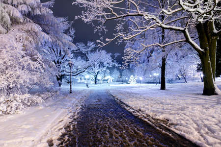 Winter night park in Old Riga, Latvia close to Bastion hill photo