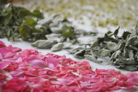 matricaria: rose petals, peppermint leaves and chamomile blossoms placed for drying Stock Photo