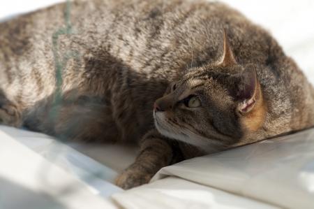 occhi sbarrati: tabby gatto sdraiato con gli occhi spalancati