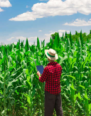 Farmer using digital tablet computer in cultivated corn field plantation. Modern technology application in agricultural growing activity. Concept Image. Stockfoto