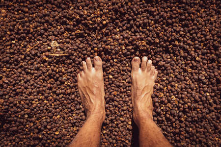 Male foot on dry coffee seed, concept farm image