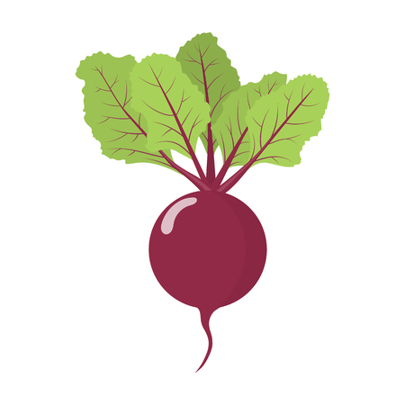 Fresh beet vegetable isolated on white background. Beet icon for market, recipe design. Organic food. Cartoon style. Clean and modern vector illustration for design.