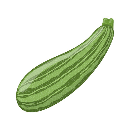 Fresh zucchini isolated on white background. Organic food. Cartoon style. Vector illustration for design.