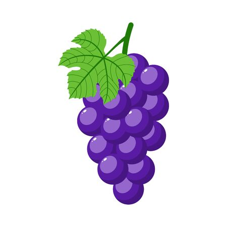 Purple grapes isolated on white background. Bunch of purple grapes with stem and leaf. Cartoon style. Vector illustration for any design.