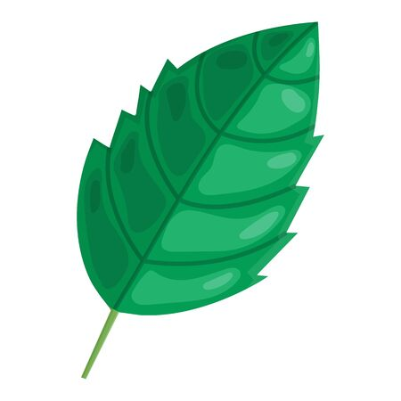 Mint cartoon green leaf isolated on white background. Vector illustration for any design.