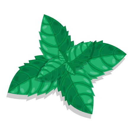 Mint cartoon green leaves isolated on white background. Vector illustration for any design.