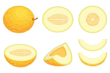 Set of fresh whole, half, cut slice melon fruit isolated on white background. Honeydew melon. Summer fruits for healthy lifestyle. Organic fruit. Cartoon style. Vector illustration for any design. 向量圖像