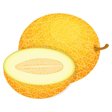 Fresh whole and half melon fruit isolated on white background. Honeydew melon. Summer fruits for healthy lifestyle. Organic fruit. Cartoon style. Vector illustration for any design.