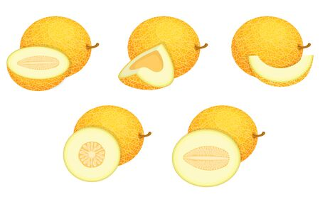 Set of fresh whole, half, cut slice melon fruit isolated on white background. Honeydew melon. Summer fruits for healthy lifestyle. Organic fruit. Cartoon style. Vector illustration for any design.