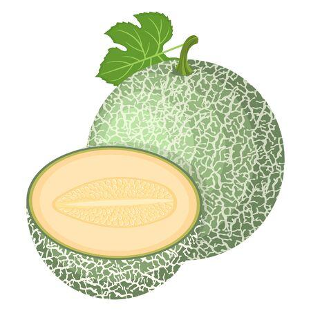 Fresh whole, half melon fruit isolated on white background. Cantaloupe melon. Summer fruits for healthy lifestyle. Organic fruit. Cartoon style. Vector illustration for any design.