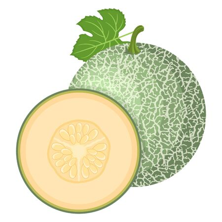 Fresh whole, half melon fruit isolated on white background. Cantaloupe melon. Summer fruits for healthy lifestyle. Organic fruit. Cartoon style.