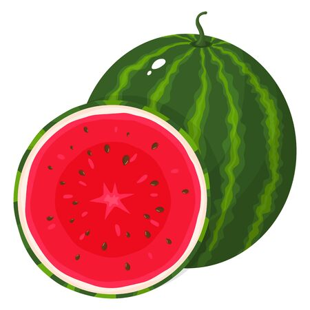 Fresh whole and half watermelon fruit isolated on white background. Summer fruits for healthy lifestyle. Organic fruit. Cartoon style.