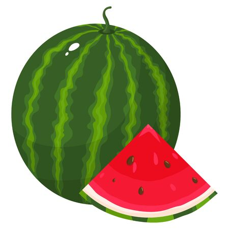 Fresh whole and cut slice watermelon fruit isolated on white background. Summer fruits for healthy lifestyle. Organic fruit. Cartoon style.