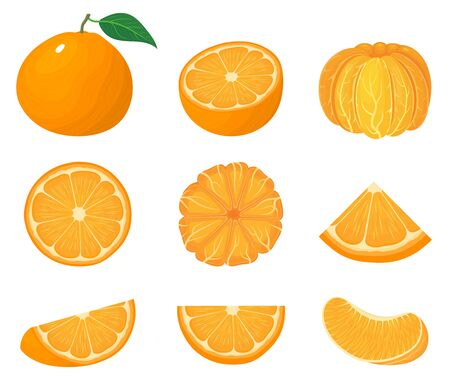 Set of fresh whole, half, cut slice tangerine or mandarin fruits isolated on white background. Summer fruits for healthy lifestyle. Organic fruit. Cartoon style. Vector illustration for any design.
