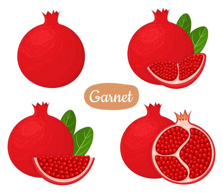 Set of fresh whole, half, cut slice pomegranate fruits isolated on white background. Summer fruits for healthy lifestyle. Organic fruit. Cartoon style. Vector illustration for any design.