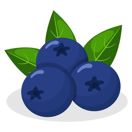 Fresh bright exotic blueberry isolated on white background. Summer fruits for healthy lifestyle. Organic fruit. Cartoon style. Vector illustration for any design.