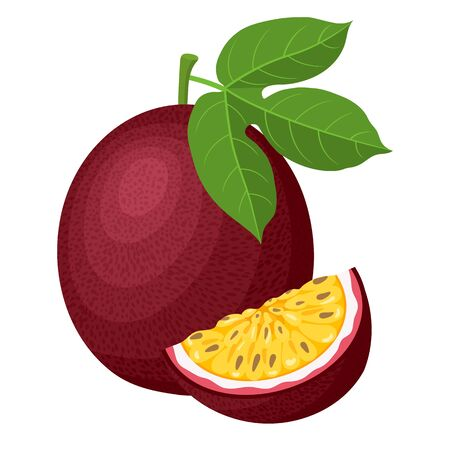 Fresh bright exotic whole and cut slice passion fruits isolated on white background. Summer fruits for healthy lifestyle. Organic fruit. Cartoon style. Vector illustration for any design.