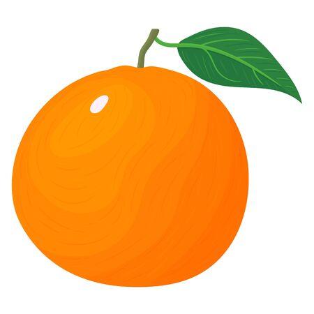 Fresh bright exotic whole grapefruit isolated on white background. Summer fruits for healthy lifestyle. Organic fruit. Cartoon style. Vector illustration for any design. Illustration