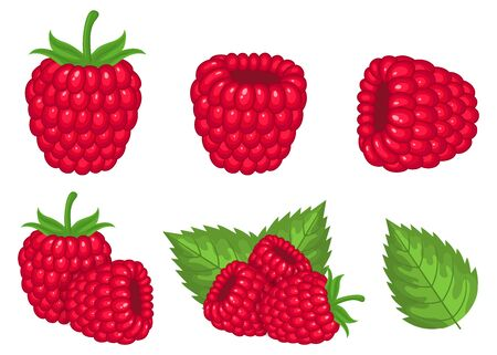 Set of fresh bright exotic raspberries isolated on white background. Summer fruits for healthy lifestyle. Organic fruit. Cartoon style. Vector illustration for any design. Illustration
