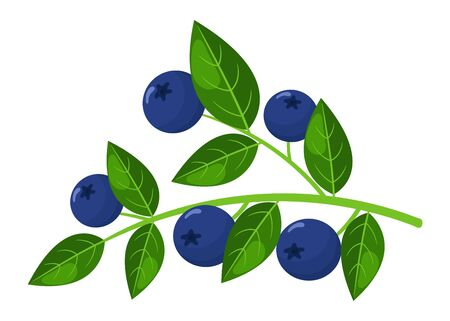 Fresh bright exotic blueberry branch isolated on white background. Summer fruits for healthy lifestyle. Organic fruit. Cartoon style. Vector illustration for any design.
