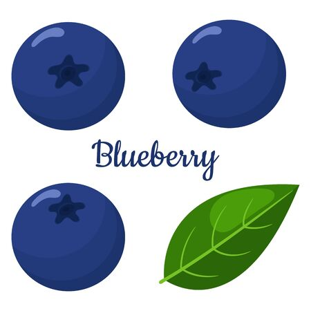 Set of fresh bright exotic blueberries isolated on white background. Summer fruits for healthy lifestyle. Organic fruit. Cartoon style. Vector illustration for any design.
