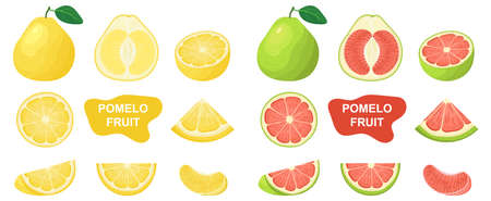 Set of fresh whole, half, cut slice pomelo fruits isolated on white background. Summer fruits for healthy lifestyle. Organic fruit. Cartoon style. Vector illustration for any design. Illustration