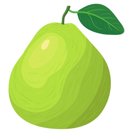 Fresh bright exotic whole green pomelo fruit isolated on white background. Summer fruits for healthy lifestyle. Organic fruit. Cartoon style. Vector illustration for any design. Illustration