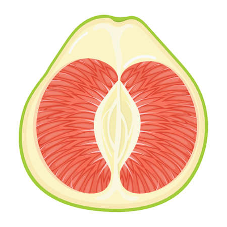 Fresh bright exotic half red pomelo fruit isolated on white background. Summer fruits for healthy lifestyle. Organic fruit. Cartoon style.