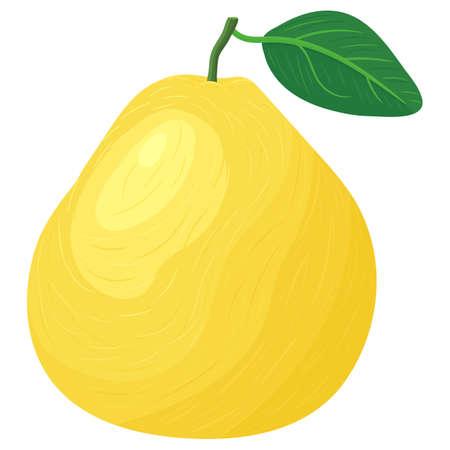 Fresh bright exotic whole yellow pomelo fruit isolated on white background. Summer fruits for healthy lifestyle. Organic fruit. Cartoon style.