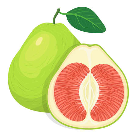 Fresh bright exotic whole and cut slice pomelo fruit isolated on white background. Summer fruits for healthy lifestyle. Organic fruit. Cartoon style. Vector illustration for any design. Illustration