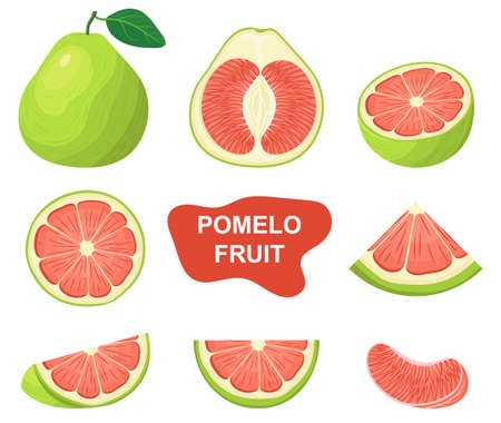 Set of fresh whole, half, cut slice red pomelo fruits isolated on white background. Summer fruits for healthy lifestyle. Organic fruit. Cartoon style. Vector illustration for any design.