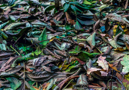 changing form: Multi-colored fallen leaves of trees in the autumn forest