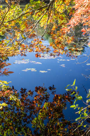 reflaction: The clear blue sky reflects on a still pond in the morning at Stony Brook Wildlife Sanctuary, Norfolk MA.