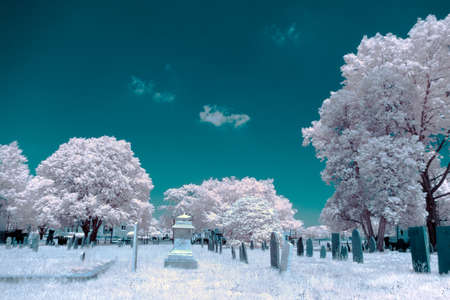 fantastical: A cemetery shot in infrared, shows fantastical colors from seeing how light reflects in light that humans can