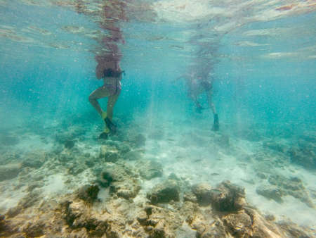 Coral and tropical fish swim around off the shore of Aruba as swimmers snorkel.