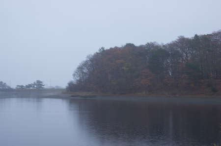 A shore lined with trees on a foggy day.