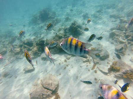 Coral and tropical fish swim around off the shore of Aruba.