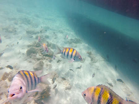 Coral and tropical fish swim around off the shore of Aruba.
